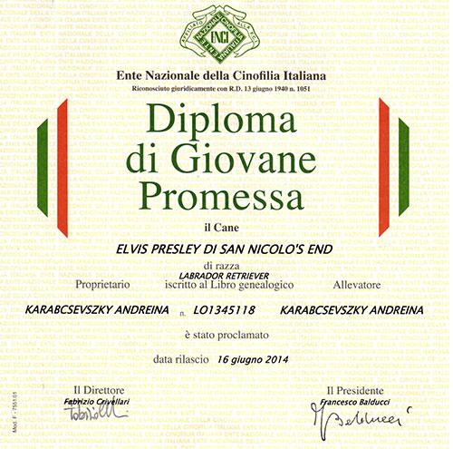 elvis-diploma-giovane-promessa-2014