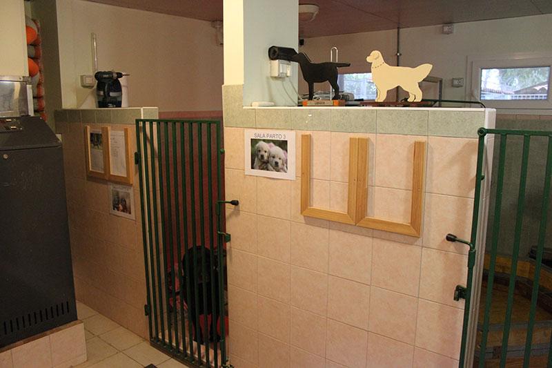 Sala Parto Per Cani : Lions nuova sala parto per cani guida lombardia ansa
