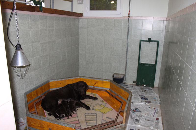 Sala Parto Per Cani : 7 sala parto allevamento san nicolò
